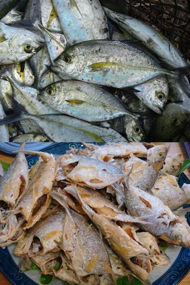 待網漁で獲れたガラ(カスミアジ)