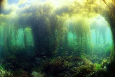 海藻の森sjpg_web