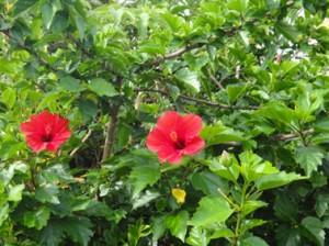 DSC01919 亜熱帯植物の繁茂する民宿の玄関写真 翌朝、島を一周しながら、風景を撮影...